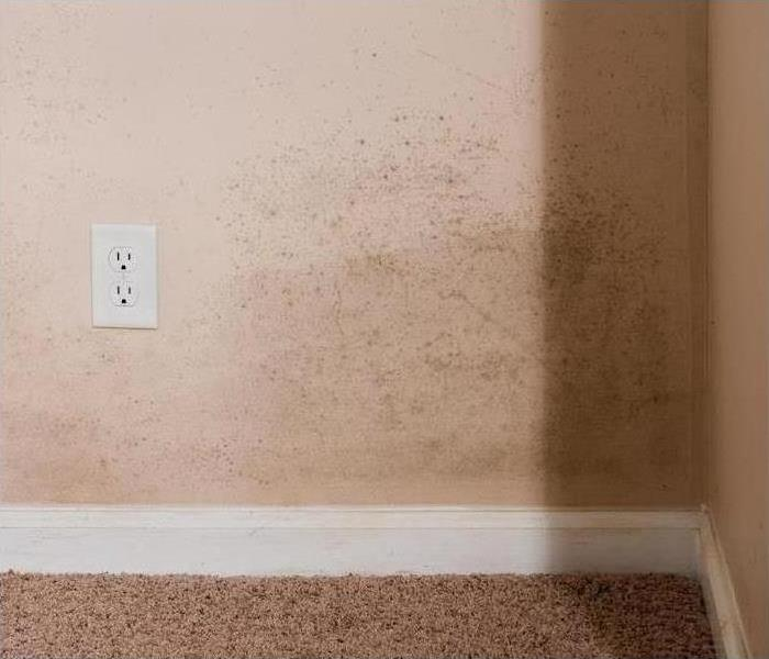 Mold Remediation SERVPRO's Thorough Action Against Mold Odors in Elk Grove