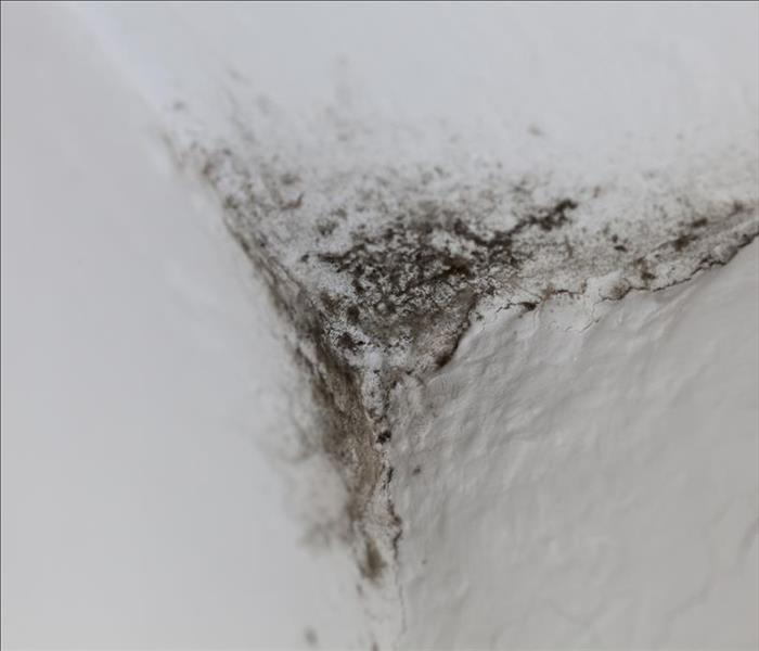 Mold Remediation Control Mold Damage In Roselle