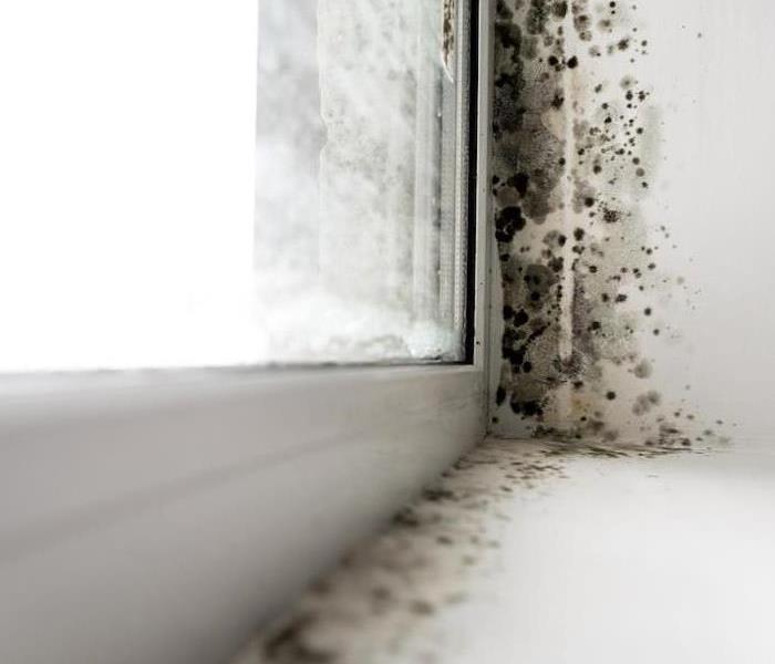 Mold Remediation Mold Damage can Quickly Spread if Cleaned Incorrectly in Schaumburg Homes