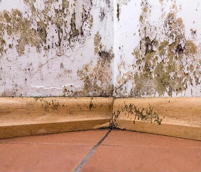 Mold Remediation Preventing Mold Damage In Itasca Properties: The First 48 Hours