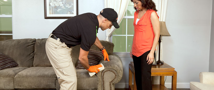 Elk Grove, IL carpet upholstery cleaning